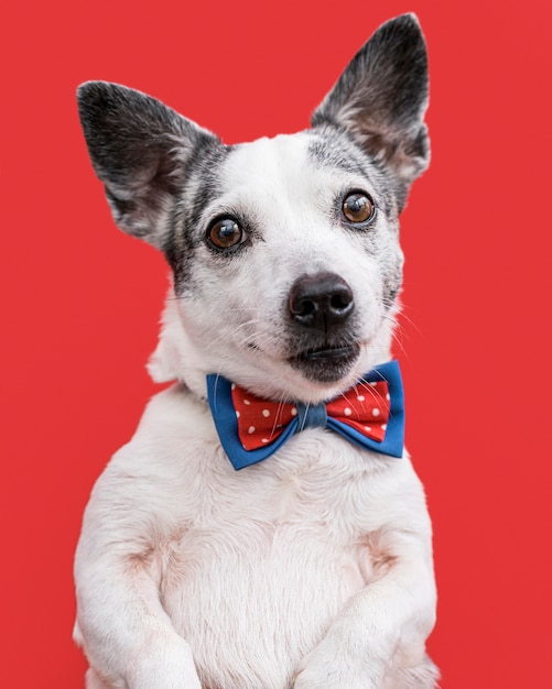 Vergrote weergave van mooie hond met strikje Gratis Foto