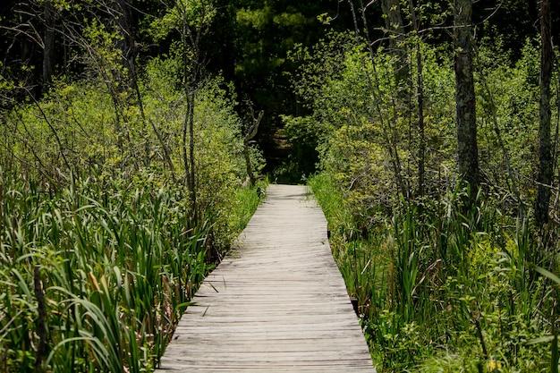 Verhoogde houten pad gaan door hoge planten in het bos Gratis Foto