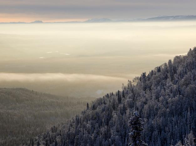 Verhoogde weergave van bomen, alaska highway, northern rockies regional municipality, british columbia, ca Premium Foto