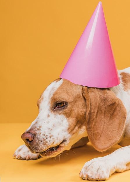 Vermoeide grappige hond met feestmuts Gratis Foto