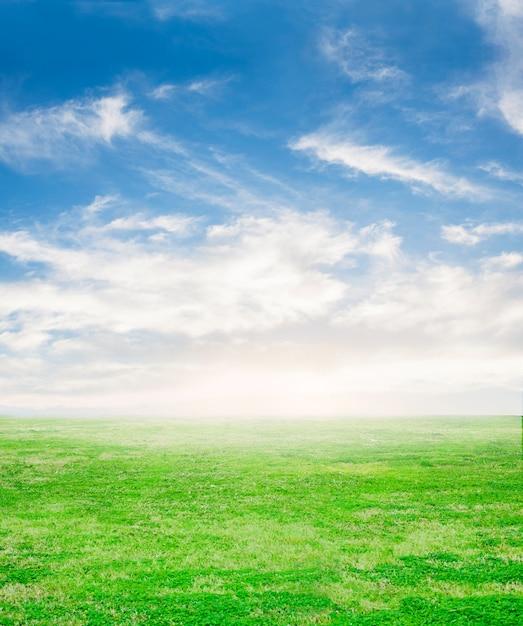 Vers gras met hemelachtergrond Gratis Foto