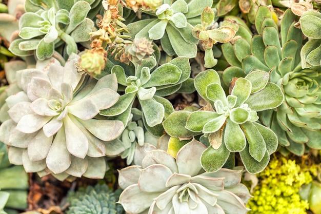 Verscheidenheid van cactussen agave succulente planten in de tuin Premium Foto