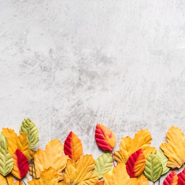 Verschillende herfstbladeren op witte tafel Gratis Foto