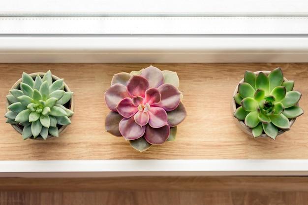 Verschillende vetplanten gerangschikt bij het raam. Premium Foto