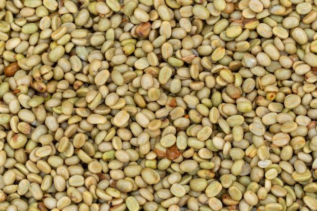 Verse arabica koffiebessen Premium Foto