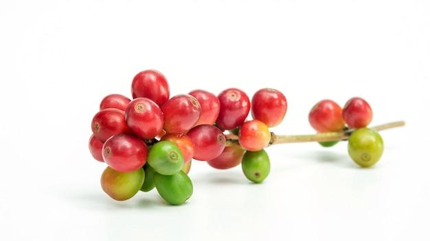 Verse arabica koffiebonen op witte achtergrond. Premium Foto