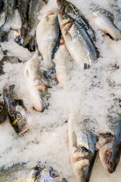 Verse doradovissen op een tegenijs in een supermarkt. Premium Foto