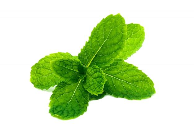 Verse en groene pepermunt, groene muntbladeren die op wit worden geïsoleerd Premium Foto
