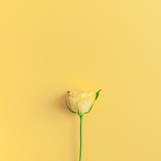 Verse gele rozen samenstelling Premium Foto
