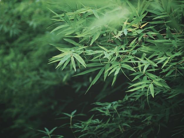 Verse groene bamboebladeren bij tropisch regenwoud. Premium Foto