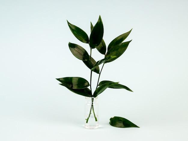 Verse groene bladeren in een vaas op blauw Premium Foto