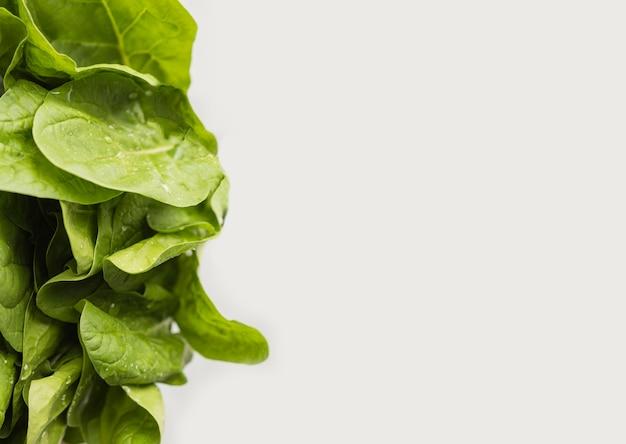 Verse groene bladeren van de ruimte van het saladexemplaar Gratis Foto