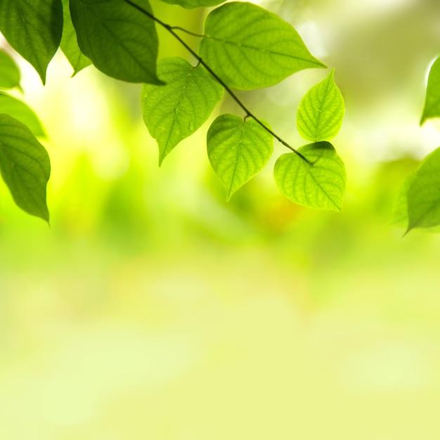 Verse groene bladeren Premium Foto