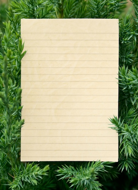 Verse groene fir takken geïsoleerd op een witte achtergrond Premium Foto