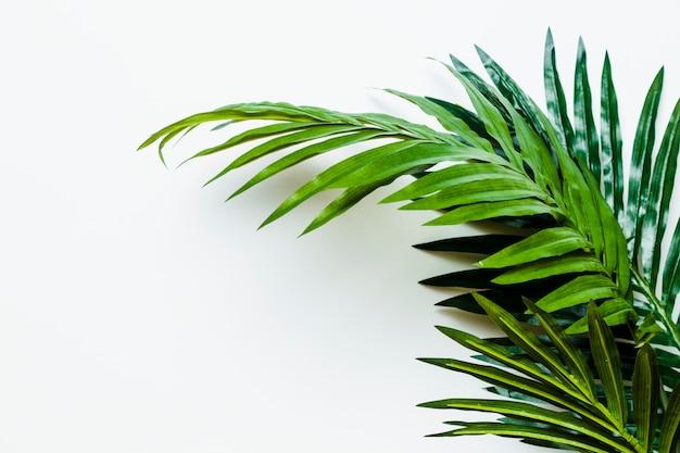 Verse groene palmbladen die op witte achtergrond worden geïsoleerd Gratis Foto