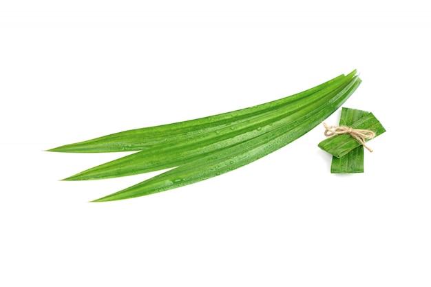 Verse groene pandan bladeren met geïsoleerde waterdruppeltjes Premium Foto