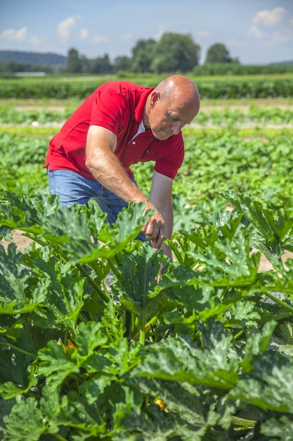 Verse groenten plukken Gratis Foto