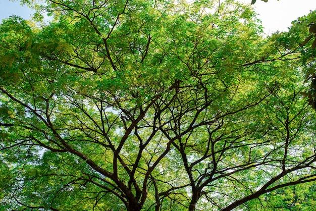 Verse grote groene boom op hemelachtergrond Premium Foto