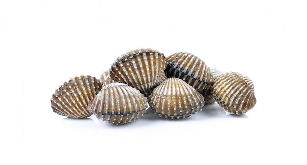Verse kokkels zeevruchten Premium Foto