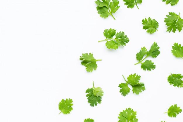 Verse korianderbladeren op witte achtergrond. Premium Foto