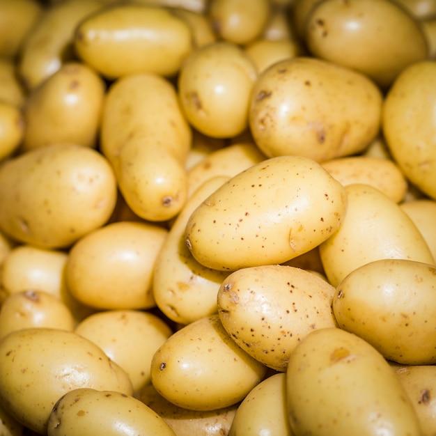 Verse oogst gezonde aardappelen Gratis Foto