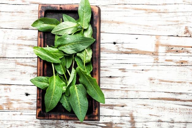 Verse spinazie bladeren Premium Foto