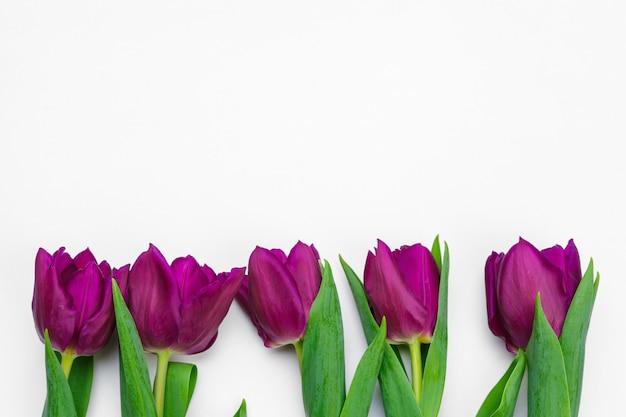 Verse tulpenbloemen die op witte achtergrond worden geïsoleerd Premium Foto