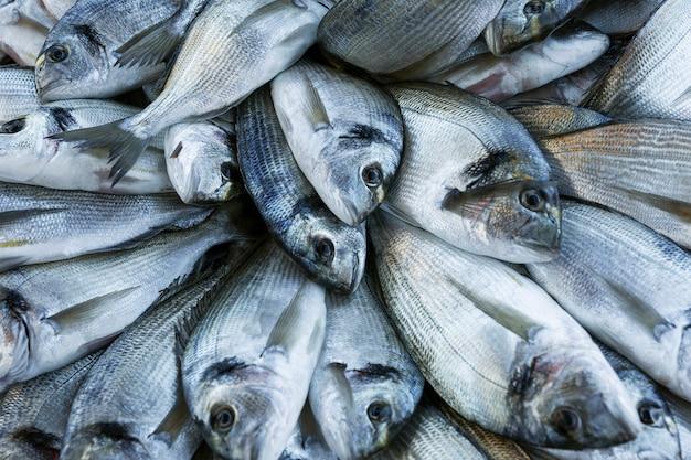Verse vis mooi aangelegd op het aanrecht. ochtend vangst. Premium Foto