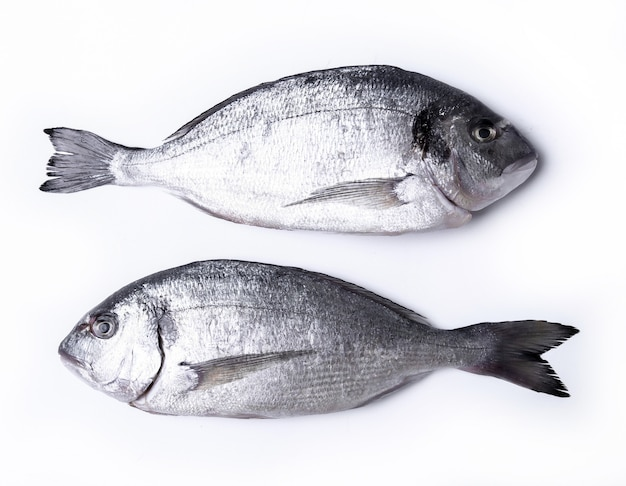 Verse vis op wit Gratis Foto
