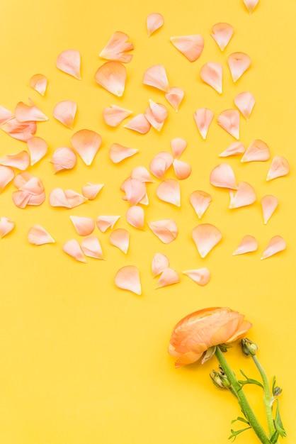 Verspreide bloemblaadjes en boterbloembloem Gratis Foto