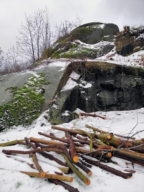 Verticaal beeld van boomtakken en rotsen bedekt met mossen en sneeuw in larvik in noorwegen Gratis Foto