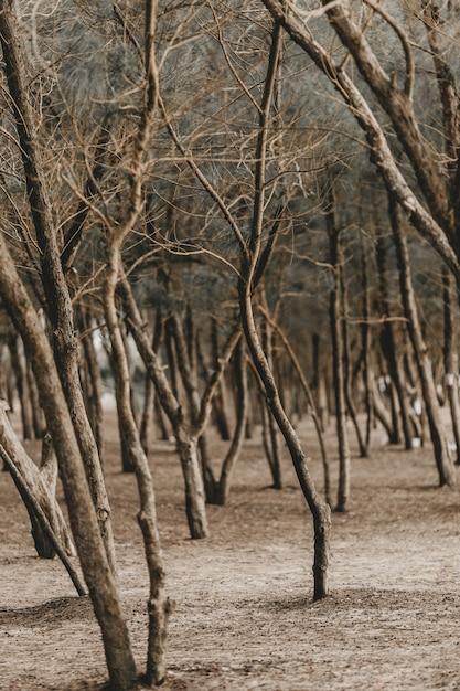 Verticaal schot van bladerloze bomen in een park in de herfst Gratis Foto