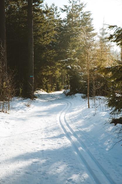 Verticaal schot van de hoge bomen op de met sneeuw bedekte grond die onder het zonlicht wordt gevangen Gratis Foto