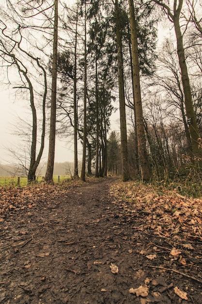 Verticaal schot van een bospad met een sombere hemel Gratis Foto