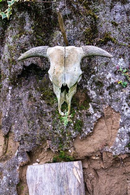 Verticaal schot van een dierlijke schedel die op een doorstane steenmuur hangt Gratis Foto