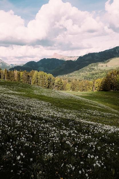 Verticaal schot van een glooiende weide met bergen op de achtergrond Gratis Foto