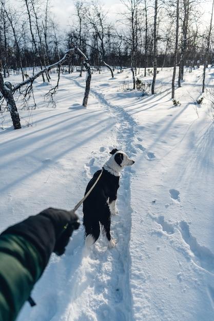 Verticaal schot van een hond die met een leiband in de sneeuw loopt Gratis Foto