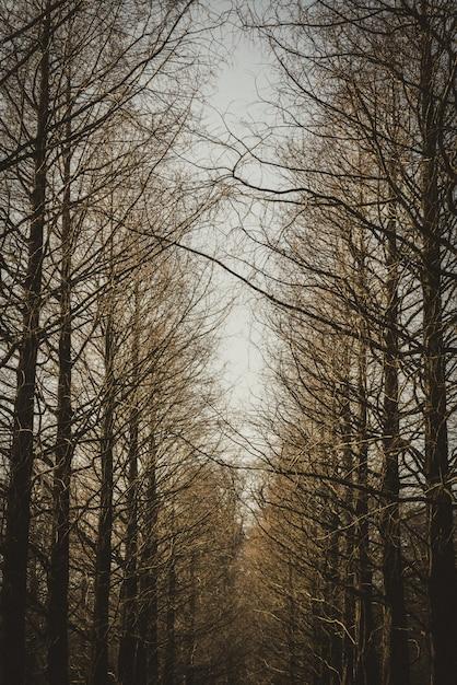 Verticaal schot van een lijn van bruine bladloze bomen. Gratis Foto