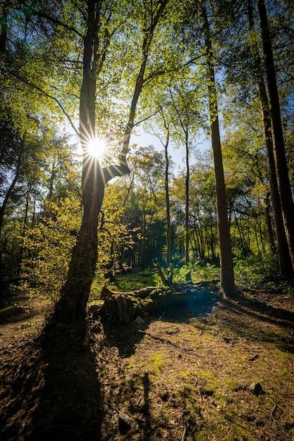Verticaal schot van een mooi schot in een bos met hoge bomen en de zon die op de achtergrond glanzen Gratis Foto