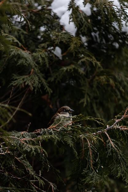 Verticaal schot van een muszitting op een sneeuw behandelde tak van een boom Gratis Foto