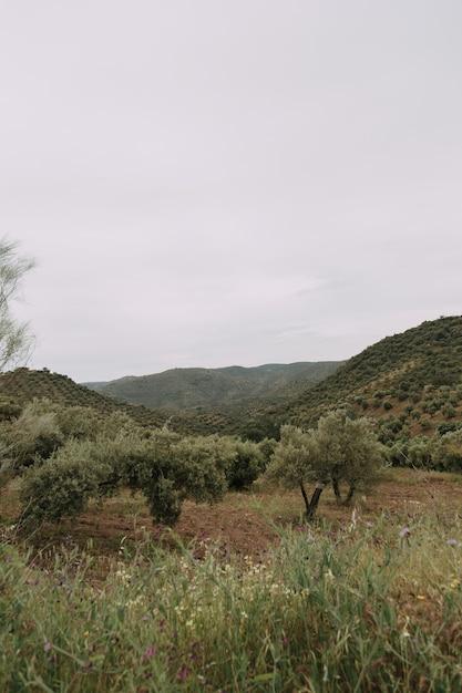 Verticaal schot van een reeks bomen in een grasrijk gebied met hoge rotsachtige bergen op de achtergrond Gratis Foto