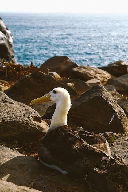 Verticaal schot van een vogelzitting op een rots Gratis Foto