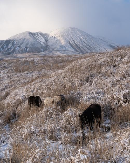Verticaal schot van enkele paarden die op de met gras bedekte velden bij een berg grazen Gratis Foto