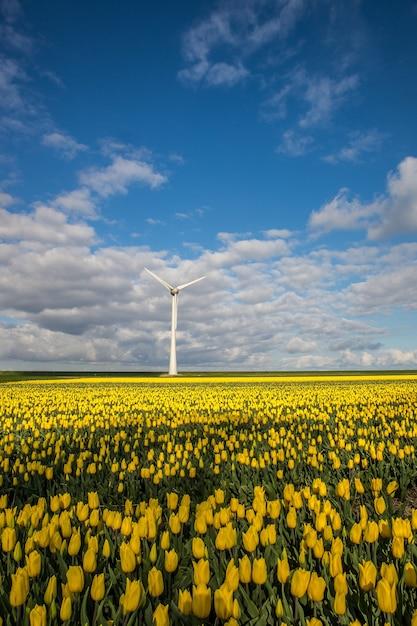 Verticaal schot van geel bloemgebied met een windmolen onder een blauwe bewolkte hemel Gratis Foto