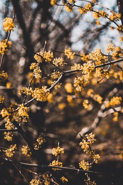 Verticaal schot van gele bloesems met vage natuurlijke achtergrond op een zonnige dag Gratis Foto