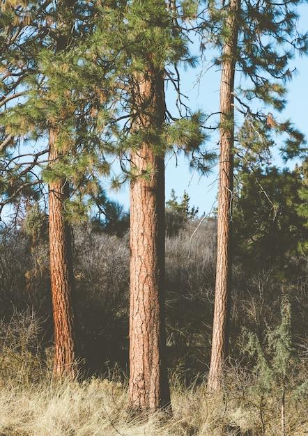Verticaal schot van hoge bomen in de tuin Gratis Foto