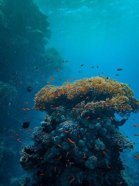 Verticaal schot van kleine kleurrijke vissen die rond mooie koralen onder de zee zwemmen Gratis Foto