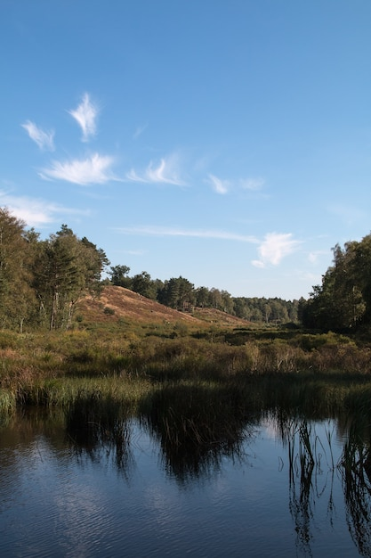 Verticaal schot van water omgeven door een bos onder een blauwe hemel Gratis Foto