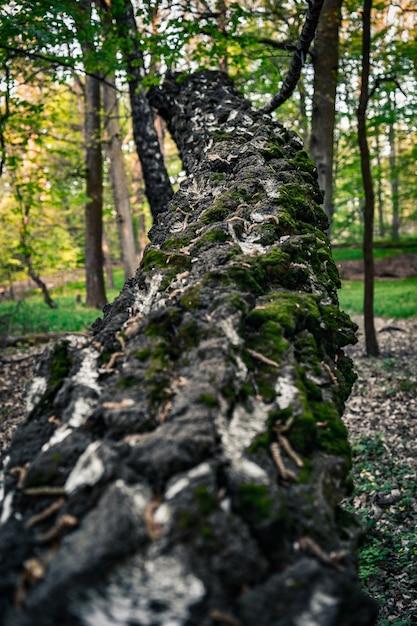 Verticale close-up shot van de bemoste stam van een omgevallen boom Gratis Foto
