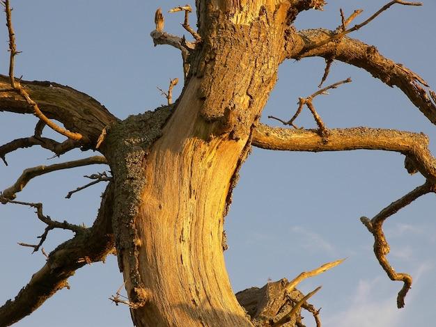 Verticale close-up shot van een beschadigde boomstam met kale takken Gratis Foto